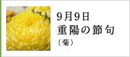 9月9日重陽の節句(菊)